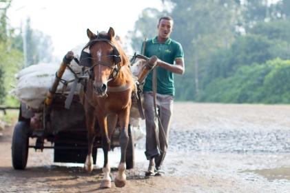 brown-horse-pulling-cart-in-ethiopia