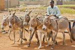 donkeys-with-cart-1-675x450