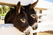 play-today-cute-donkeys-675x450