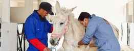 spana-vets-treating-mule-e1528382855864